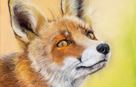 The Devon Painter - Fox